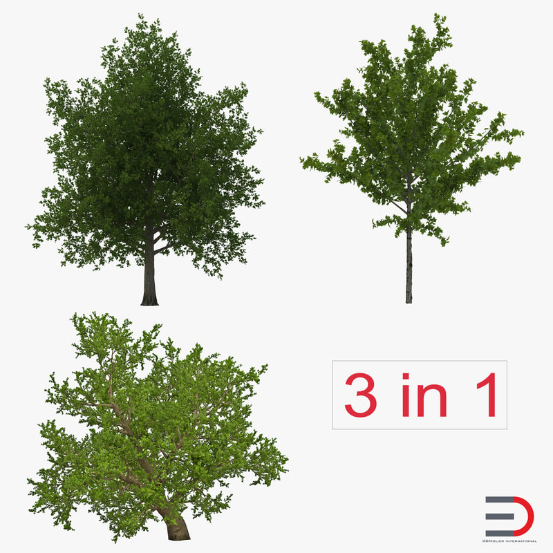 3d model summer red maple trees