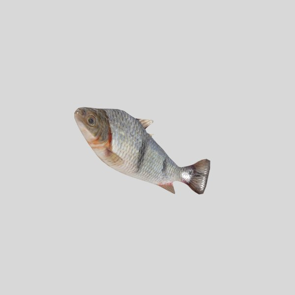 fish animation 3d model