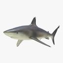 silvertip shark 3D models