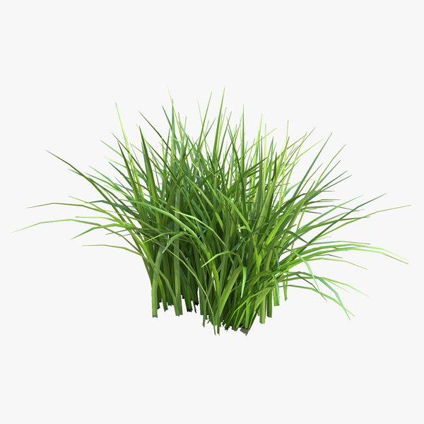 max grass field