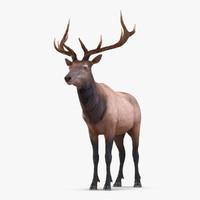 Elk Rigged
