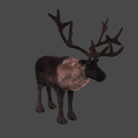reindeer deer 3d 3ds