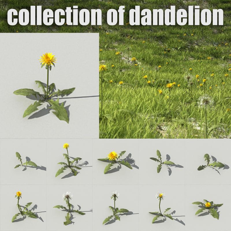 dandelion 2014 2015 obj