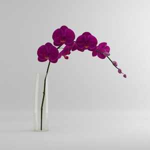 max orchid moth glass