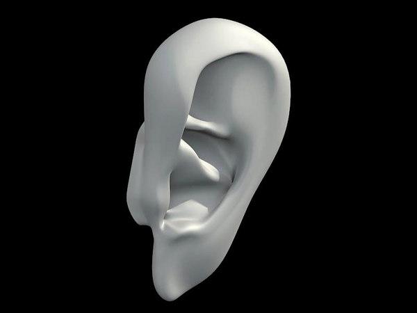 3d ear head model