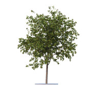 rowan-tree seasons 2 3d model