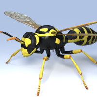 wasp animal 3d model