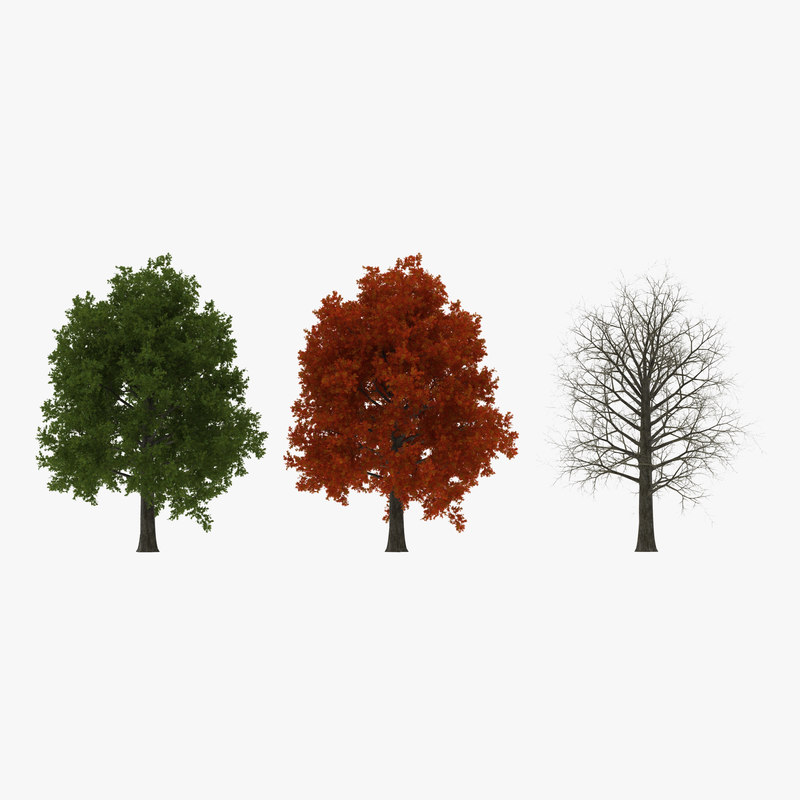 3d model red oak tree set