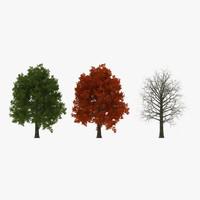 3d model red oak tree set