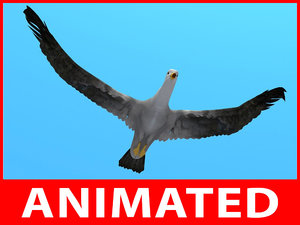 rigged seagull loop animation 3d model