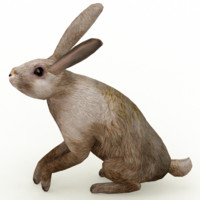 Hare_animated