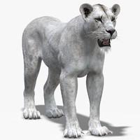 max lioness 2 white