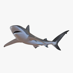 3ds max dusky shark pose 2