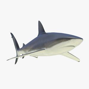 3d dusky shark
