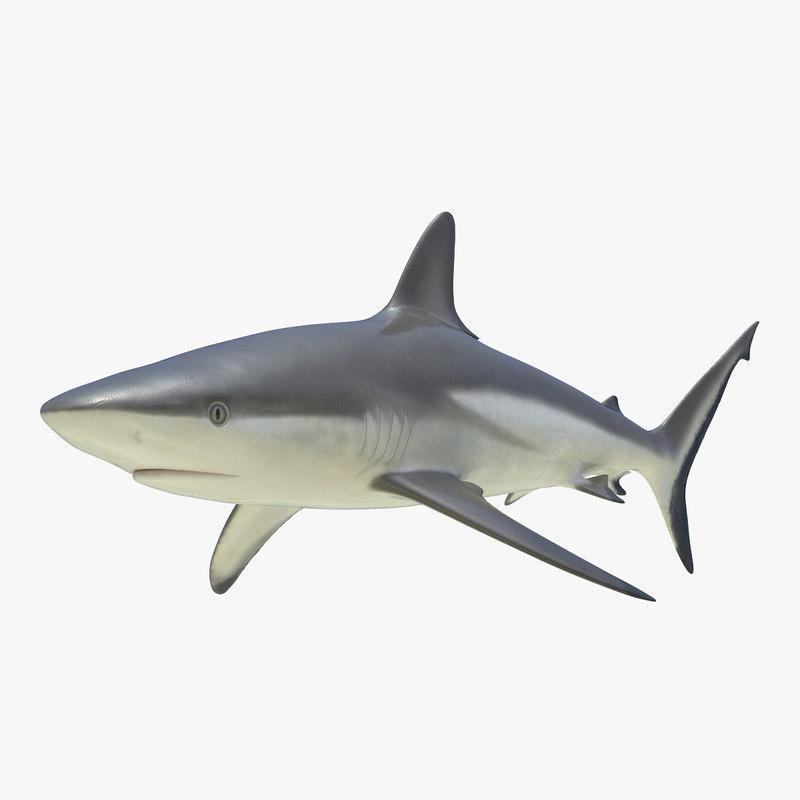 grey reef shark 3d 3ds