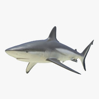 grey reef shark 3d 3ds