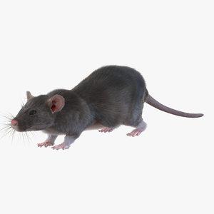 3d model of rat fur