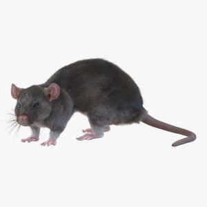 rat pose 5 3d model