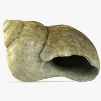 3d model of snail shell