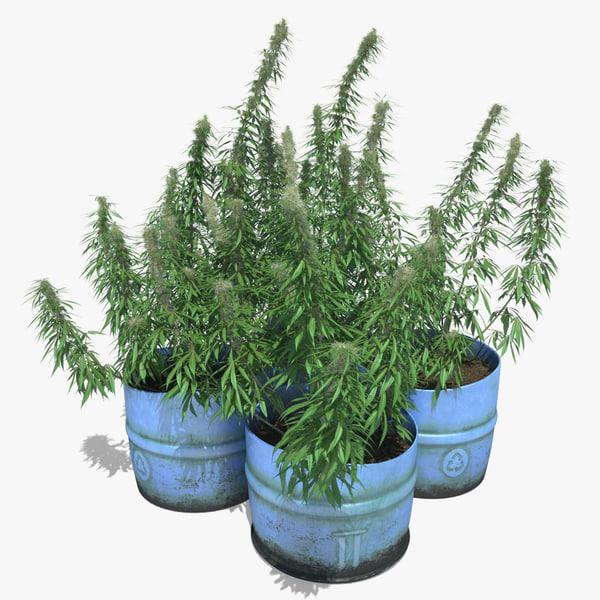 3d cannabis sativa plants set model