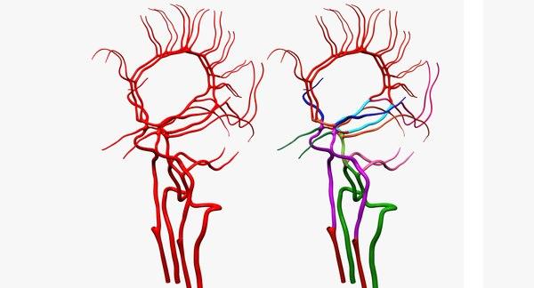 arteries brain anatomy 3d max