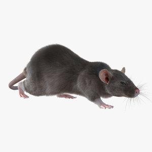 max rat pose 3