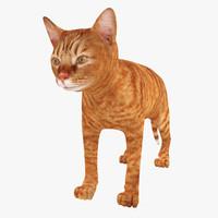 red cat 3d max