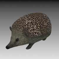 hedgehog 3d model