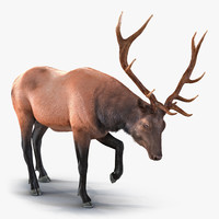 Elk Pose 4 with Fur 3D Model