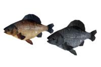 fish crucian 3d model