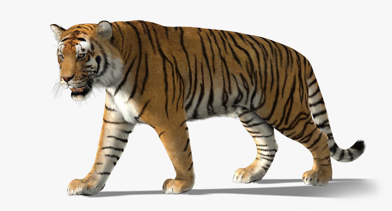 3d model tiger fur
