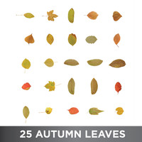 25 Autumn Leaves Pack