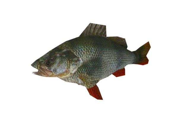 3d fish perch