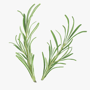 3d rosemary leaves modeled model