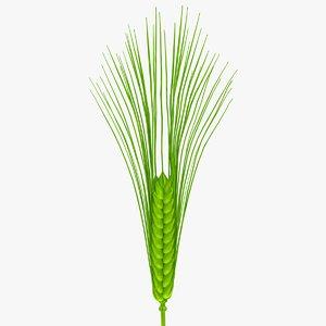wheat green 3d model