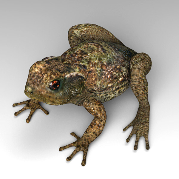 3d model toad cane