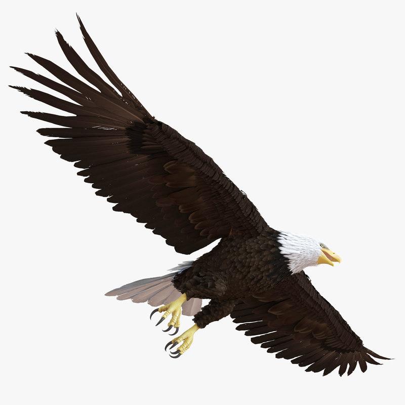 bald eagle pose 7 3d model