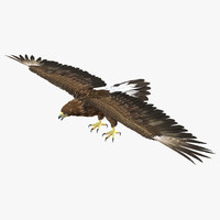 3d golden eagle model