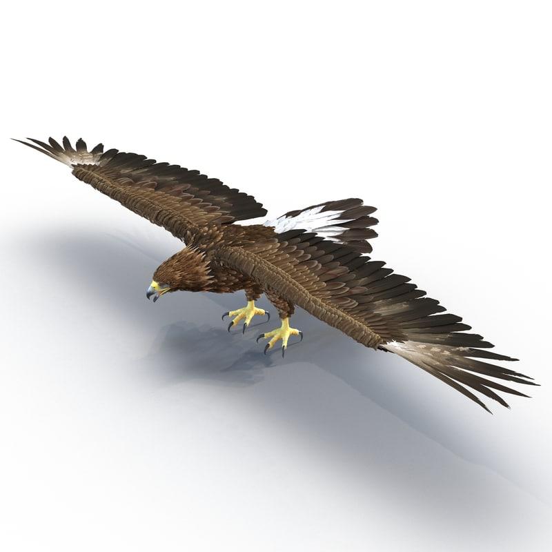 3d golden eagle model