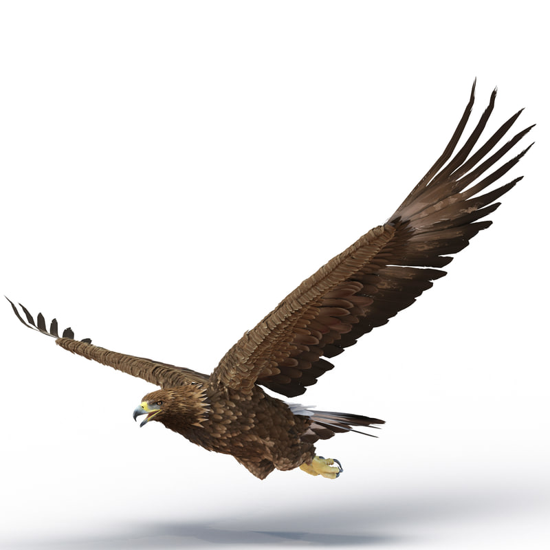 3d golden eagle pose 2 model