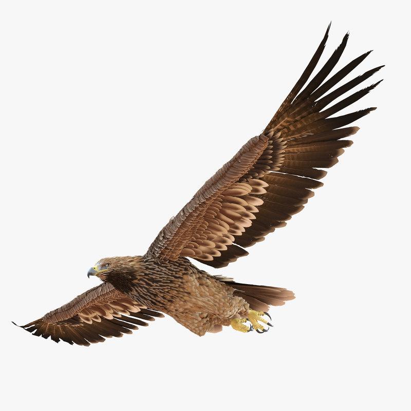 3d imperial eagle pose 2 model