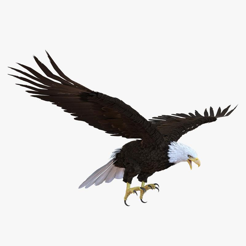 3d bald eagle rigged