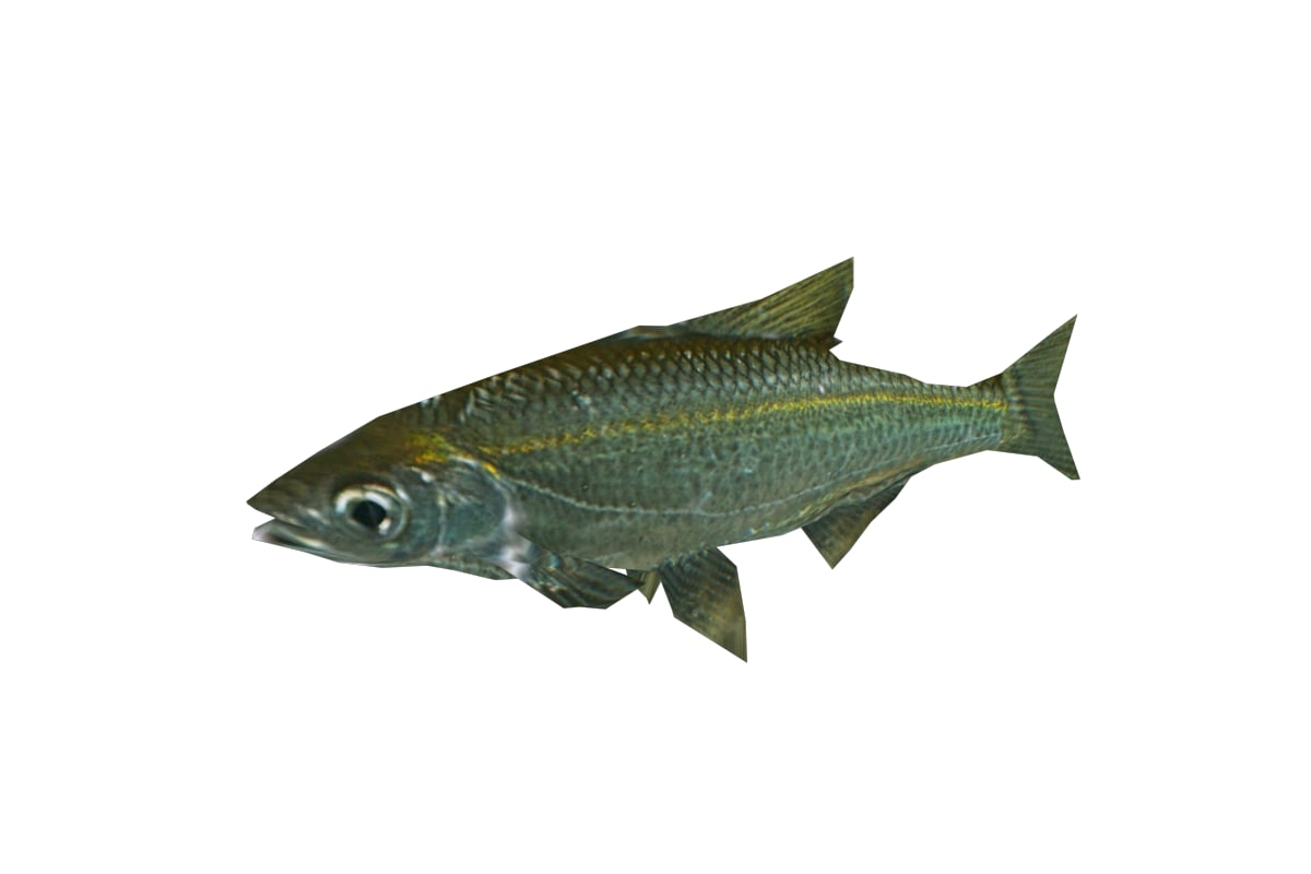 3d fish bleak