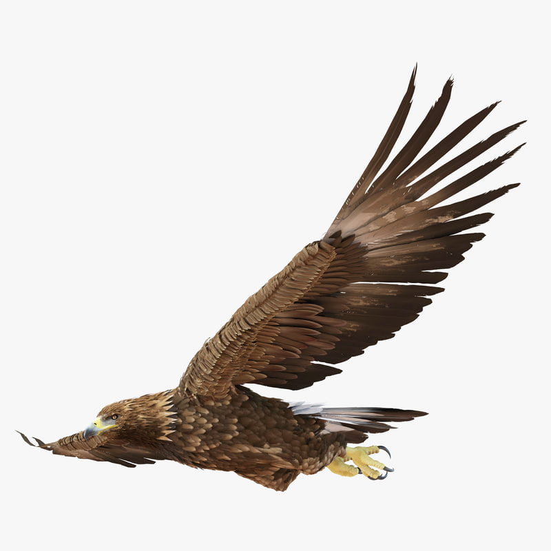 3d golden eagle pose 3 model
