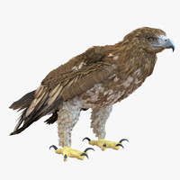 3d gurney eagle pose 5