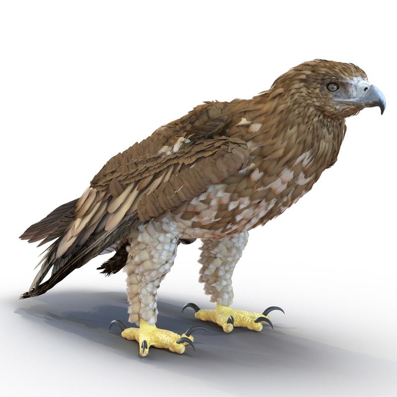 3d gurney eagle pose 5
