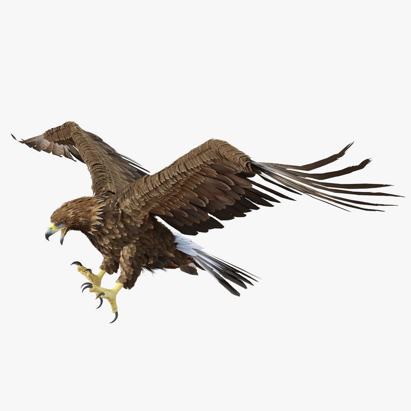3d golden eagle pose 6 model