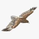 Gurney Eagle Pose 3 3D Model