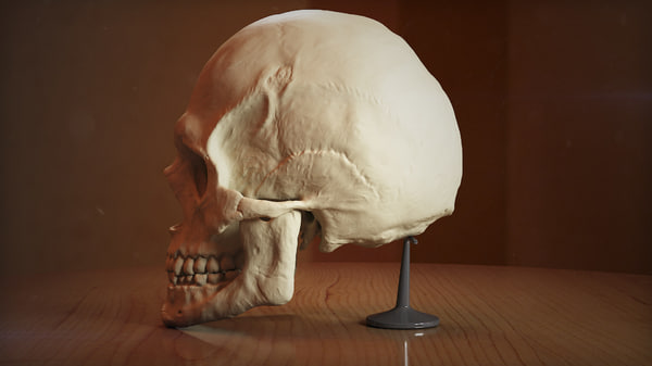 3d model man head