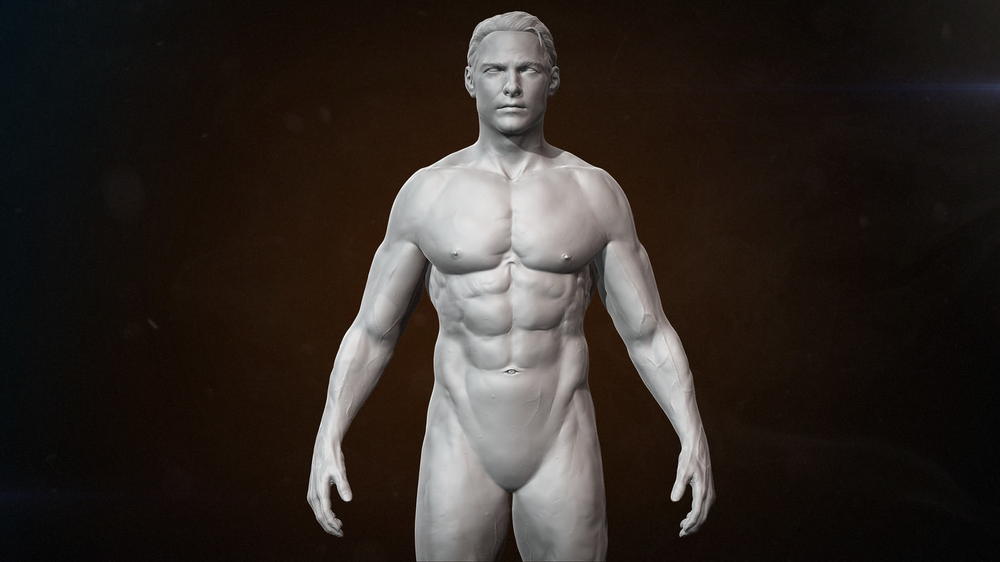 muscle anatomy 3d model, Muscles